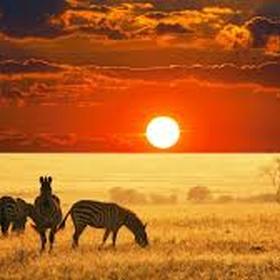 Take a safari trip in africa - Bucket List Ideas