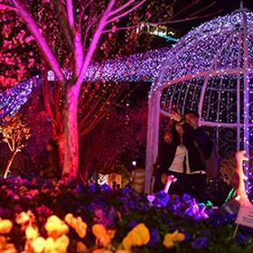 Attend HongKong Flower show - Bucket List Ideas
