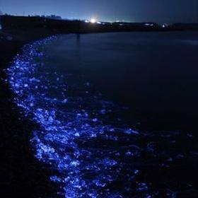 See the firefly squids glow - Bucket List Ideas