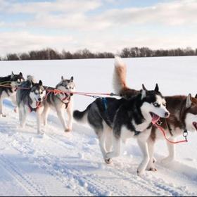 Experience: dog sledding - Bucket List Ideas