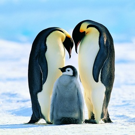 See penguins in the wild - Bucket List Ideas