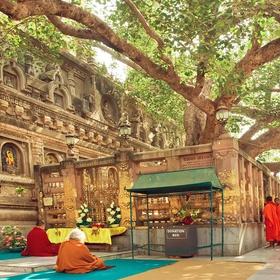 Visit Buddha's holy Bodhi tree in Bodh Gaya, India - Bucket List Ideas