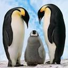 See a penguin (not in the zoo) - Bucket List Ideas