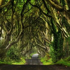 Ride through the Dark Hedges in Northern Ireland - Bucket List Ideas