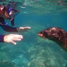 Snorkel with sea lions - Bucket List Ideas
