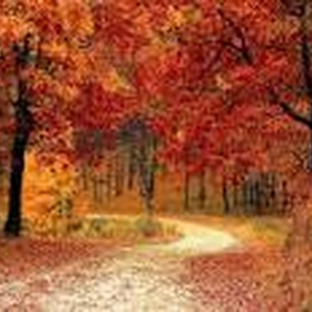 Visit New England in the Fall when the leaves change - Bucket List Ideas