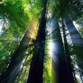 See California Redwoods - Bucket List Ideas