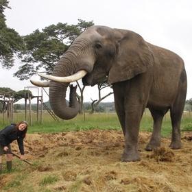 Volunteer with Animals - Bucket List Ideas