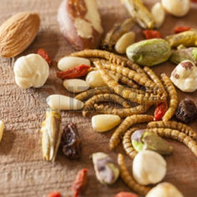 Cook with DRIED INSECTS - Bucket List Ideas