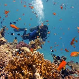 Scuba dive in the red sea, egypt - Bucket List Ideas