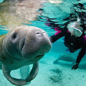 Swimming with Manatees - Bucket List Ideas