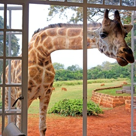 🍴 Eat at the Giraffe Manor in Kenya - Bucket List Ideas