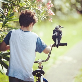 Have a whistle conversation with a wild bird - Bucket List Ideas