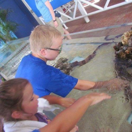 Visit sea world - Bucket List Ideas