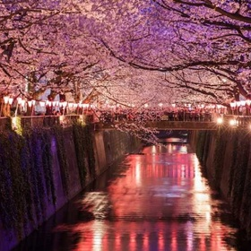 See the cherry blossoms in Japan - Bucket List Ideas