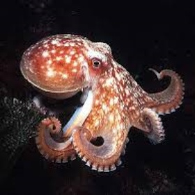 See an octopus while scuba diving or snorkeling - Bucket List Ideas