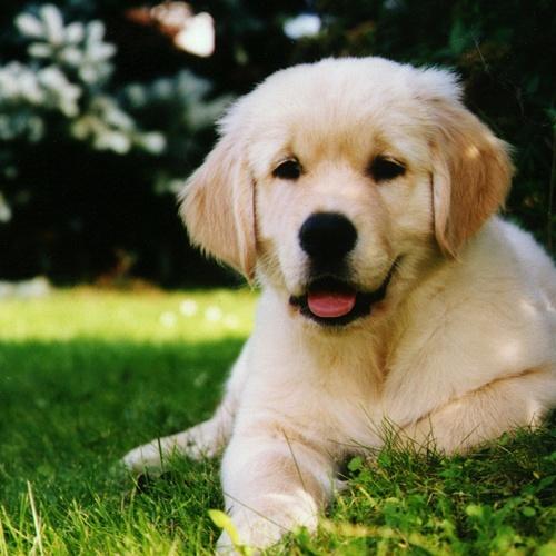 Have a dog - Bucket List Ideas