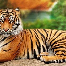 Experience an Tiger Behind the Scenes - Bucket List Ideas