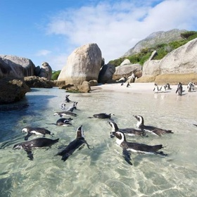 Visit Boulders Beach, Cape Town, South Africa - Bucket List Ideas