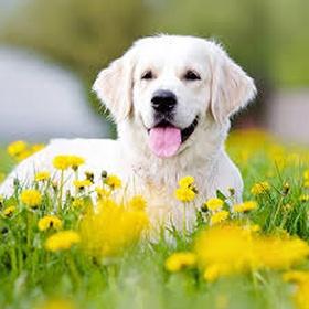 Adopt a dog on death row from an animal shelter!! - Bucket List Ideas