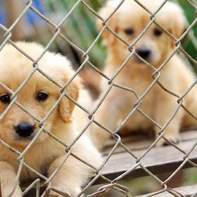 Have an animal shelter - Bucket List Ideas
