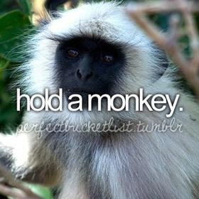 Hold a Monkey - Bucket List Ideas