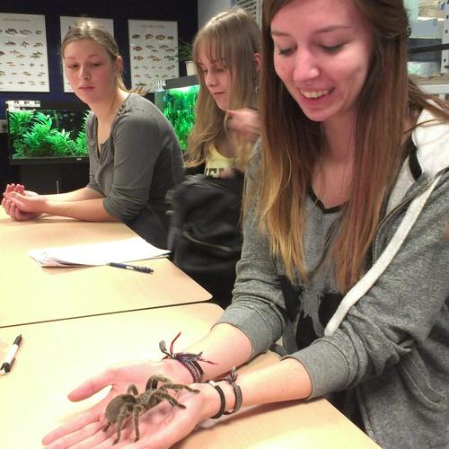 Hold a huge spider - Bucket List Ideas