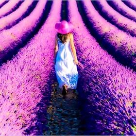 Walk Through the Lavender Fields of Provence France - Bucket List Ideas