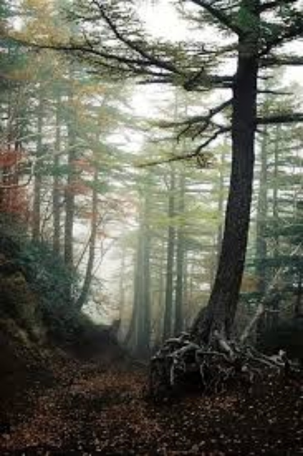 Hike through Japan's infamous 'Aokigahara Forest' (suicide forest) - Bucket List Ideas