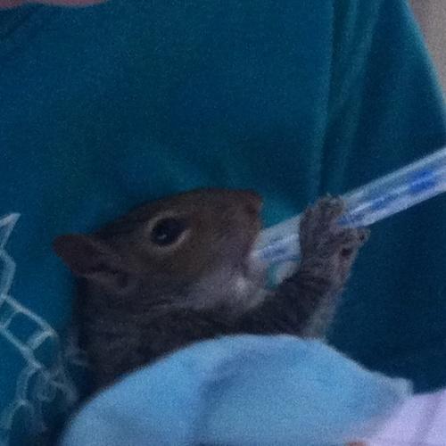Rescue a baby Squirrel - Bucket List Ideas