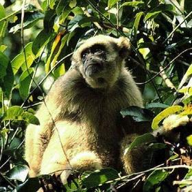Visit Atlantic Forest Southeast Reserves - Bucket List Ideas
