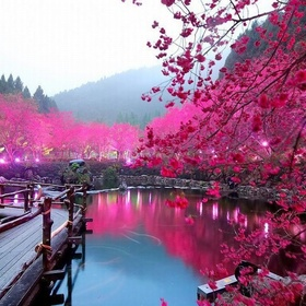 See cherry blossoms in Japan - Bucket List Ideas
