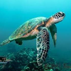 Swim with a sea turtle - Bucket List Ideas
