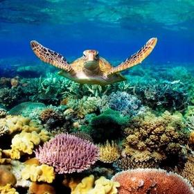 Get my scuba diver's license - Bucket List Ideas