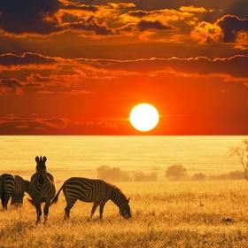 Go on an African Safari - Bucket List Ideas