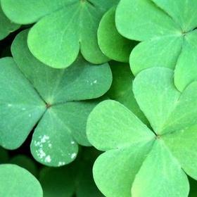Celebrate St Patrick's Day in Ireland - Bucket List Ideas