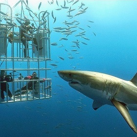 Dive in a cage with great white sharks - Bucket List Ideas