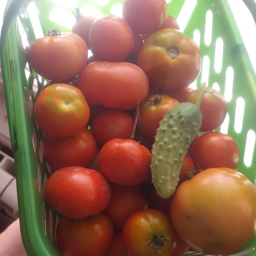 Eat more  vegetables - Bucket List Ideas