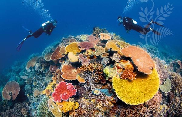 SCUBA dive the Great Barrier Reef - Bucket List Ideas