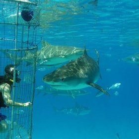 Swim with friendly sharks - Bucket List Ideas