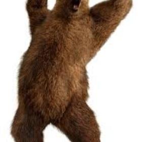 Fight A Bear - Bucket List Ideas