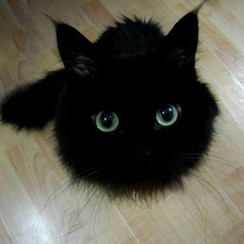 Own a pet cat - Bucket List Ideas