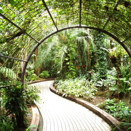 Grow a garden - Bucket List Ideas