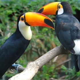 Visit Weltvogelpark Walsrode, Bomlitz - Bucket List Ideas