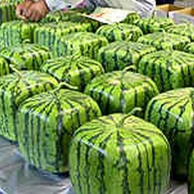 Eat a square watermelon - Bucket List Ideas