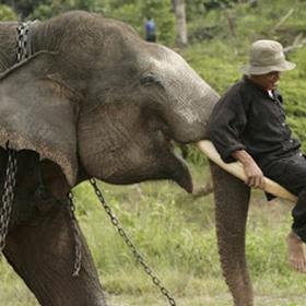 Make friendship with an elephant - Bucket List Ideas