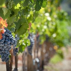 Do a tour of a vineyard - Bucket List Ideas