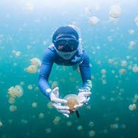 Swim with the harmless jellyfish in Palau - Bucket List Ideas