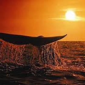 Go Whale Watching - Bucket List Ideas