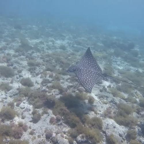 Snorkeling in The virgin islands - Bucket List Ideas